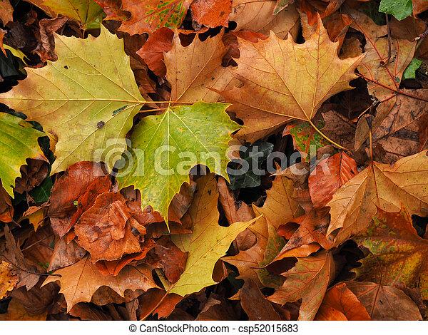 ősz kilépő, színes - csp52015683