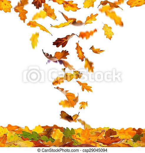 ősz kilépő, tölgy - csp29045094