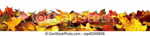 ősz kilépő, transzparens, elszigetelt - csp40349838