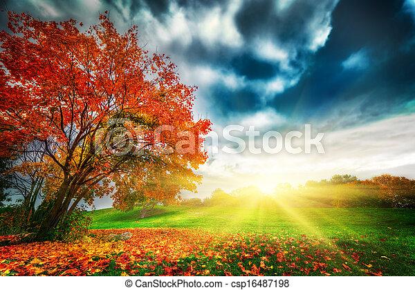 ősz, liget, táj, bukás - csp16487198