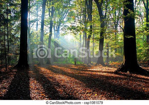 ősz, napsugarak, erdő, önt - csp1081079