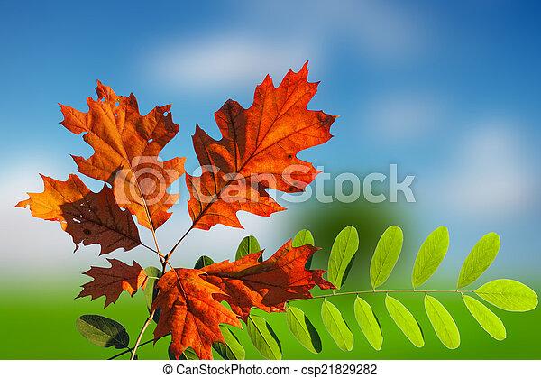 ősz, színes - csp21829282