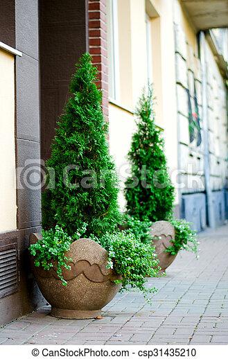 ściana Cegła Doniczka Tło Drzewa