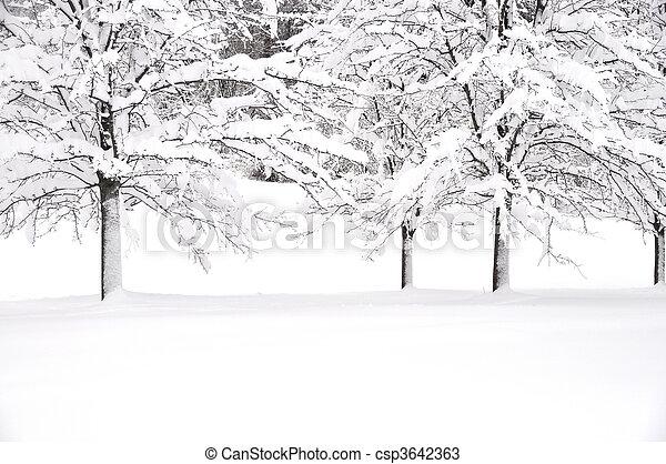 śnieg, drzewa - csp3642363
