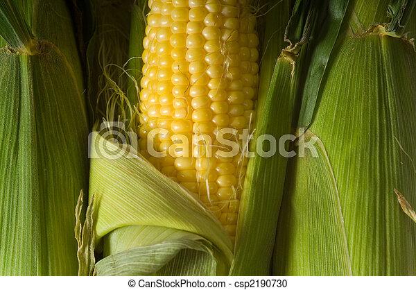 świeży, kukurydziany kaczan - csp2190730
