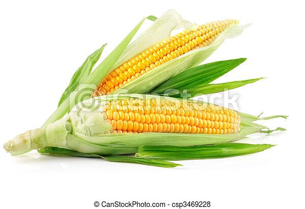 świeży, nagniotek, zielone listowie, owoce - csp3469228