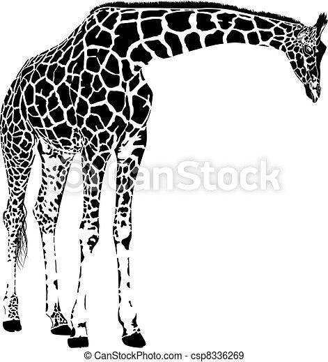 žirafa, vektor - csp8336269