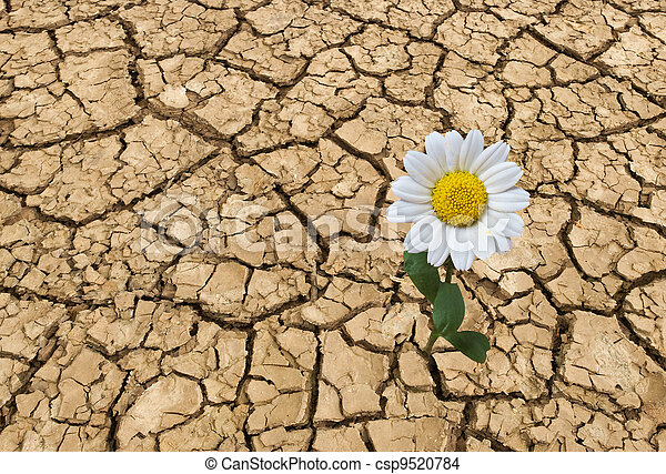 άγονος , καλοκαίρι , γη  - csp9520784
