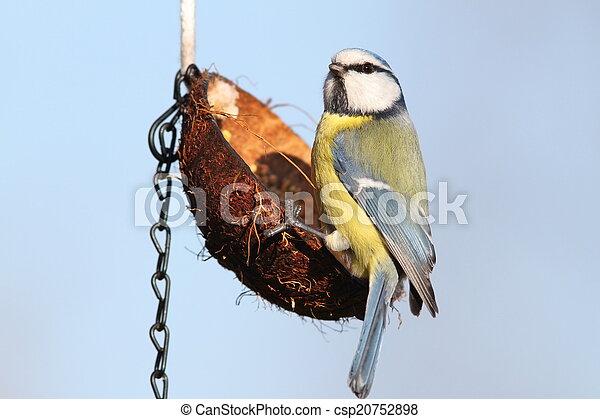 άγριος , μικρό , πουλί , κήπος , τροφοδότης  - csp20752898