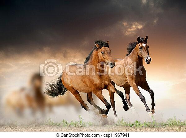 άλογα , ηλιοβασίλεμα  - csp11967941
