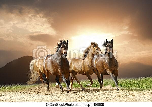 άλογα , τρέξιμο  - csp11968081