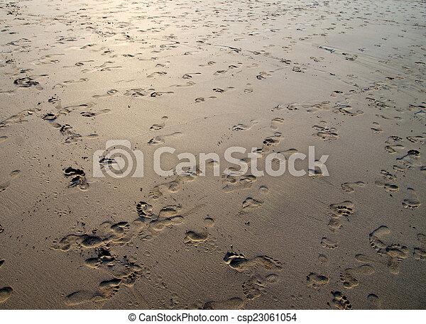 άμμοs  - csp23061054