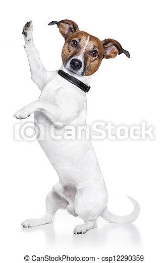 αβοήθητος 5 , σκύλοs  - csp12290359