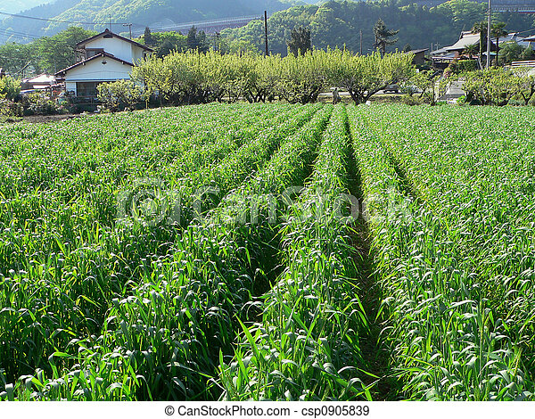 αγροτικός , γεωργία αγρός  - csp0905839