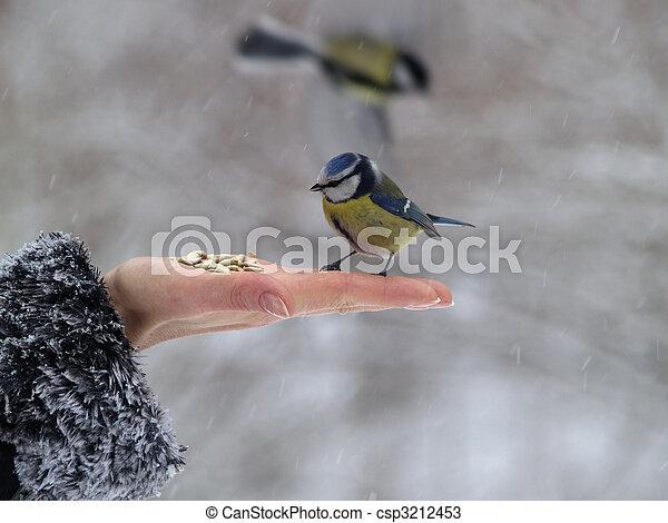 πραγματικό πουλί εικόνες