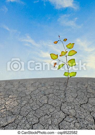 ακμάζω , άγονος , γη , νεαρό φυτό  - csp9522582