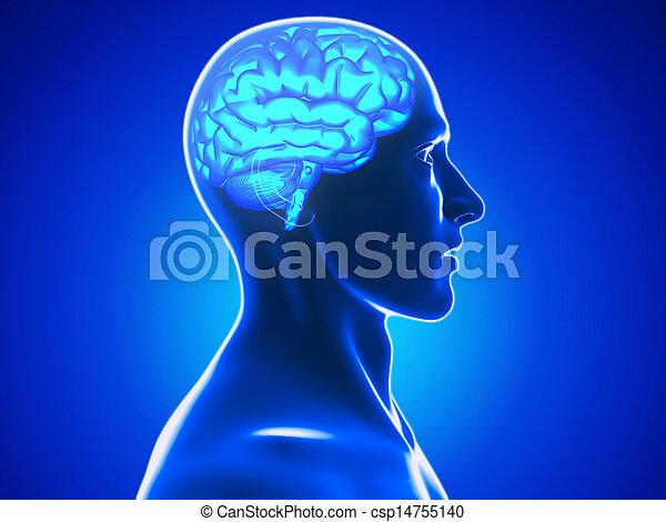 ανθρώπινο όν ανοίγω το κεφάλι  - csp14755140