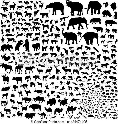 απεικονίζω σε σιλουέτα , άγρια ζωή , ασία  - csp24474405