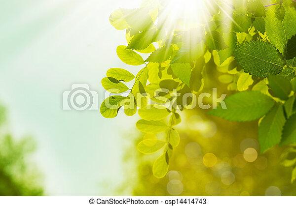 αφαιρώ , φόντο , περιβάλλοντος , πράσινο , σχεδιάζω , δικό σου , κόσμοs  - csp14414743