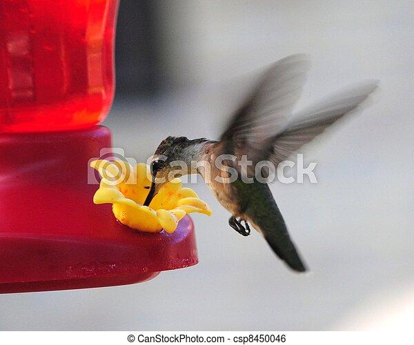 βοή , πουλί  - csp8450046