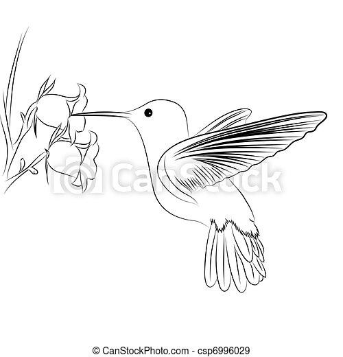 βοή , πουλί  - csp6996029