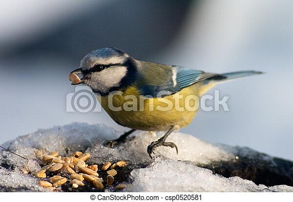 γαλάζιο αιγίθαλος , απόγονοι , κατάλληλος για να φαγωθεί ωμός , πουλί  - csp0520581