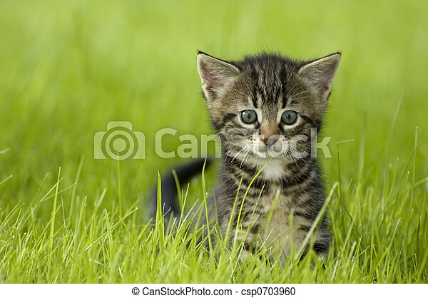 γατάκι  - csp0703960