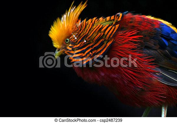 γεμάτος χρώμα πουλί  - csp2487239