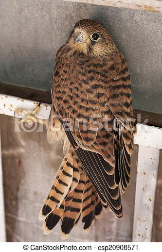 18 ίντσες μεγάλο πουλί