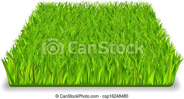 γρασίδι , πράσινο  - csp16248480