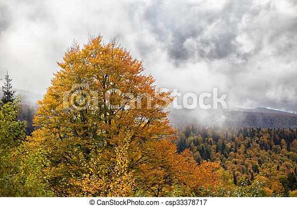 δάσοs , πέφτω  - csp33378717