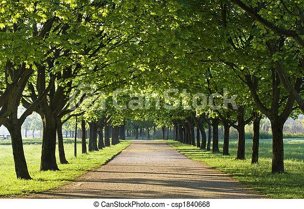 δέντρα  - csp1840668