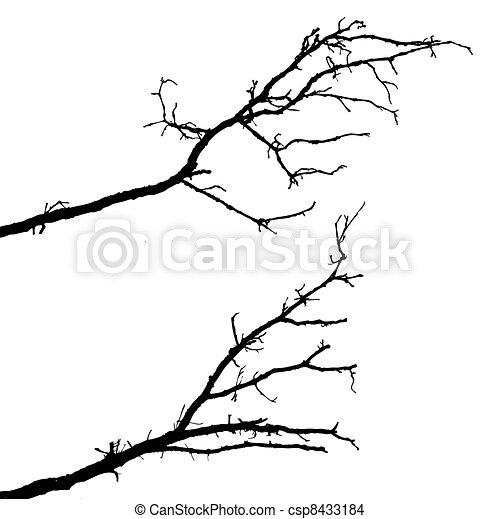 δέντρο , άσπρο , περίγραμμα , παράρτημα , φόντο  - csp8433184