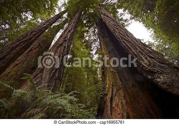 ερυθρόδενδρο , ακτοπλοϊκός , δάσοs  - csp16955761