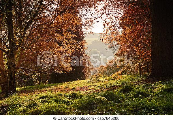 ζωηρός , εύχυμος , φθινόπωρο , μπογιά , διαμέσου , δάσοs , φύλλωμα , πέφτω , βλέπω  - csp7645288