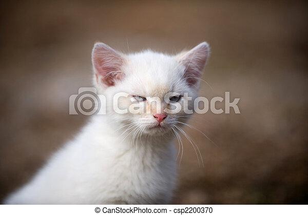 θυμωμένος , γατάκι  - csp2200370