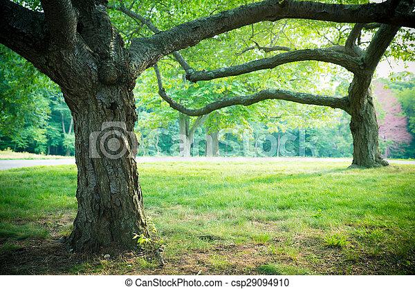 καλοκαίρι , δέντρα  - csp29094910