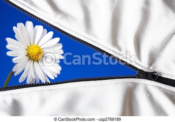 καλοκαίρι , λουλούδι  - csp2769189