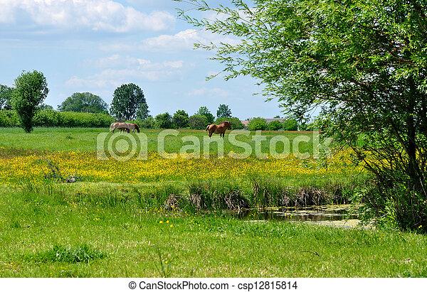 καλοκαίρι , τοπίο  - csp12815814