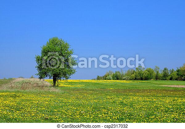 καλοκαίρι , τοπίο  - csp2317032