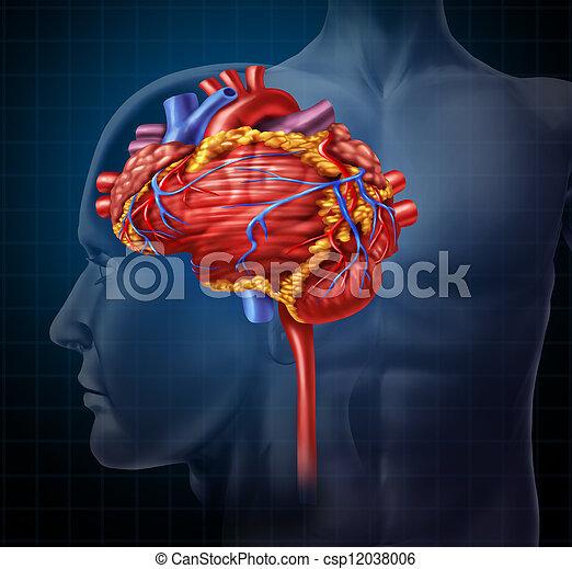 καρδιά , εγκέφαλοs  - csp12038006