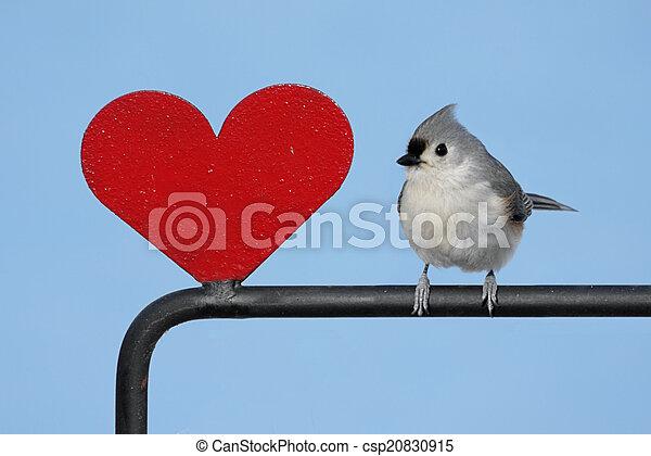 καρδιά , πουλί  - csp20830915