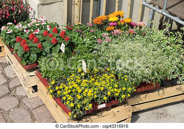 κατάστημα , λουλούδι  - csp43316916