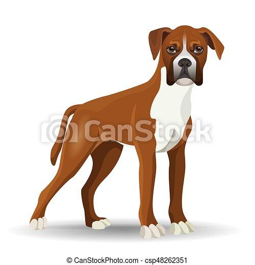 μικροβιοφορέας , γεμάτος , σκύλοs , εικόνα , απομονωμένος , μήκος , είδος σκύλου , άσπρο  - csp48262351