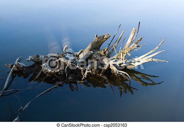 νερό , δέντρο , ρίζα  - csp2053163