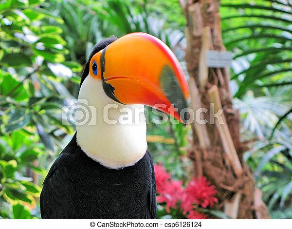 οπωροφάγο πτηνό με μέγα ράμφο , πουλί  - csp6126124