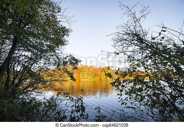 πάνω , λίμνη , δέντρα , φθινόπωρο , μπογιά , πέφτω , βλέπω  - csp64621038