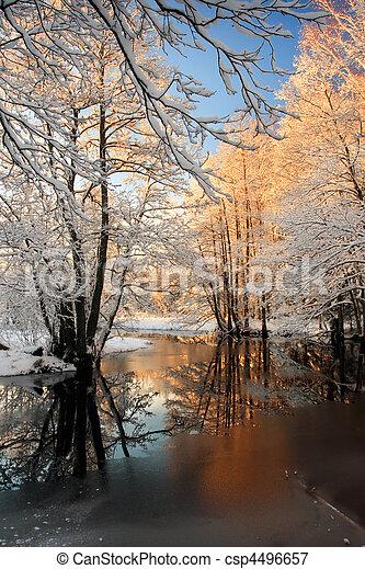πάχνη , χειμερινός , δέντρα  - csp4496657