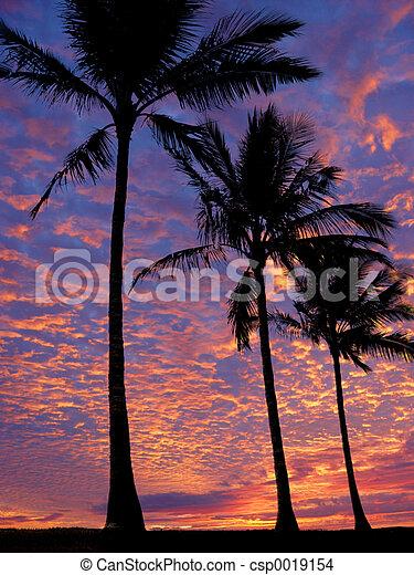 παραλία , ηλιοβασίλεμα  - csp0019154