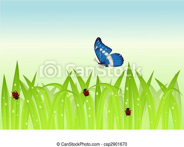 πεταλούδα , γρασίδι  - csp2901670